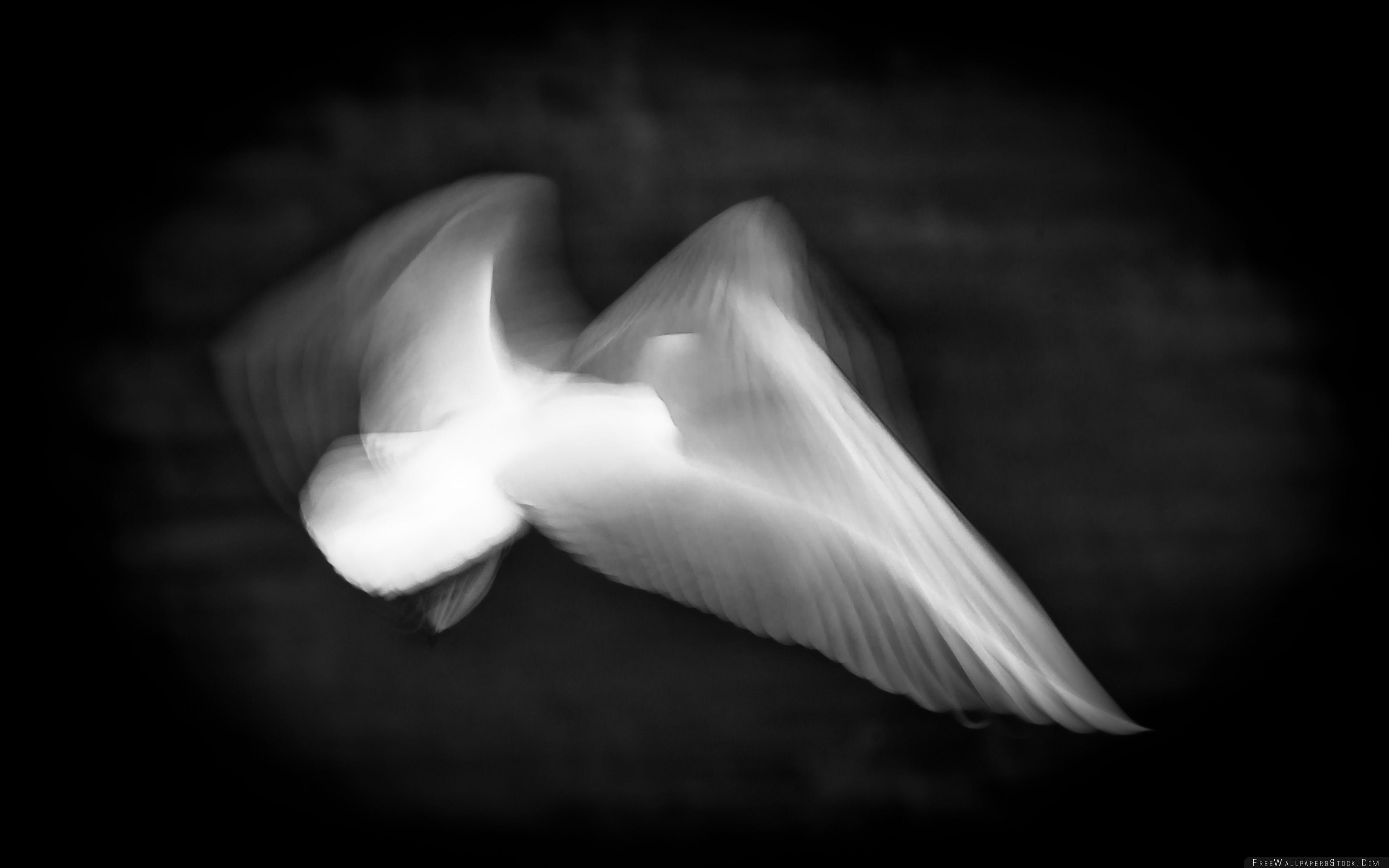 Download Free Wallpaper Wings   Light