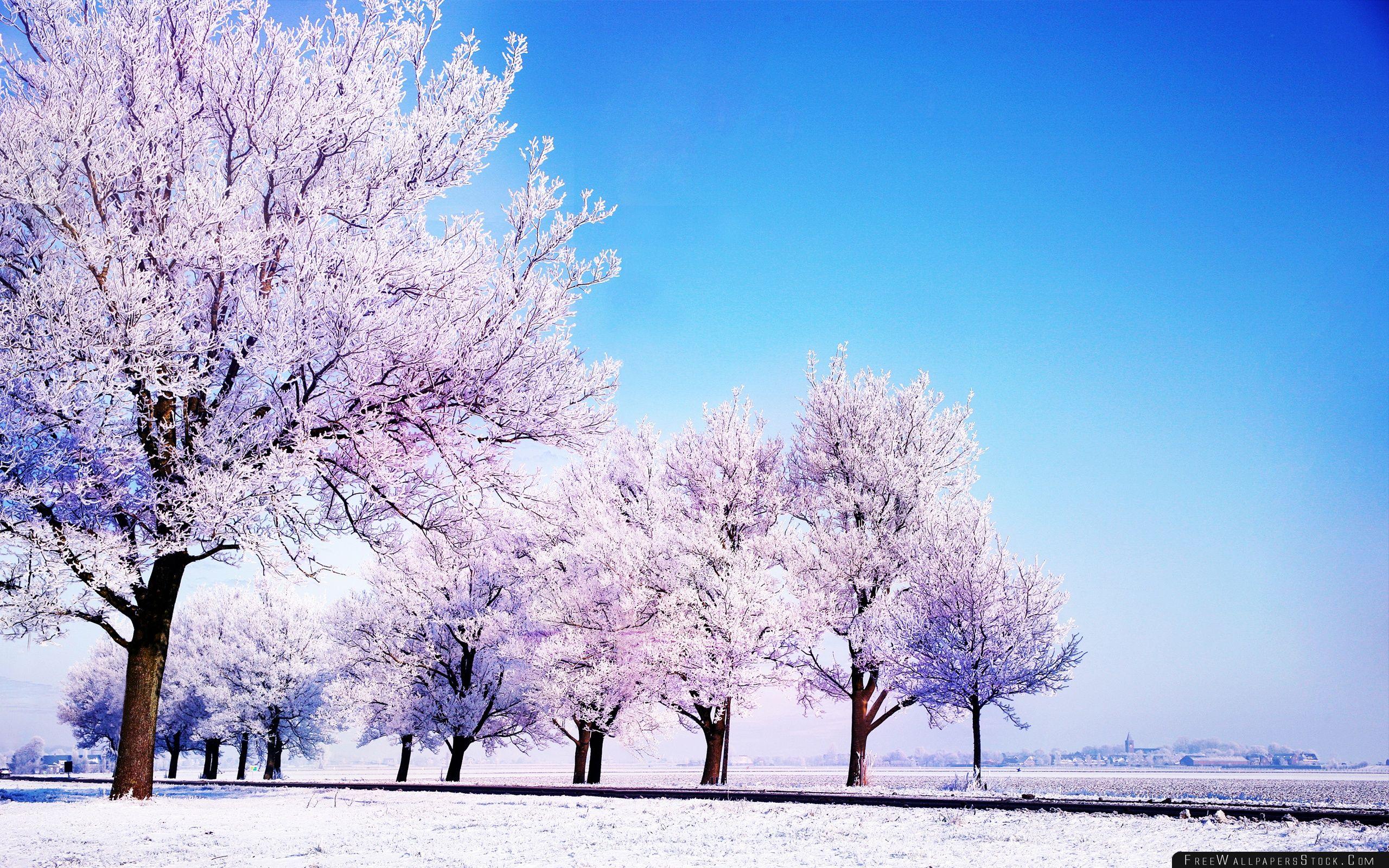 Download Free Wallpaper Winter Background