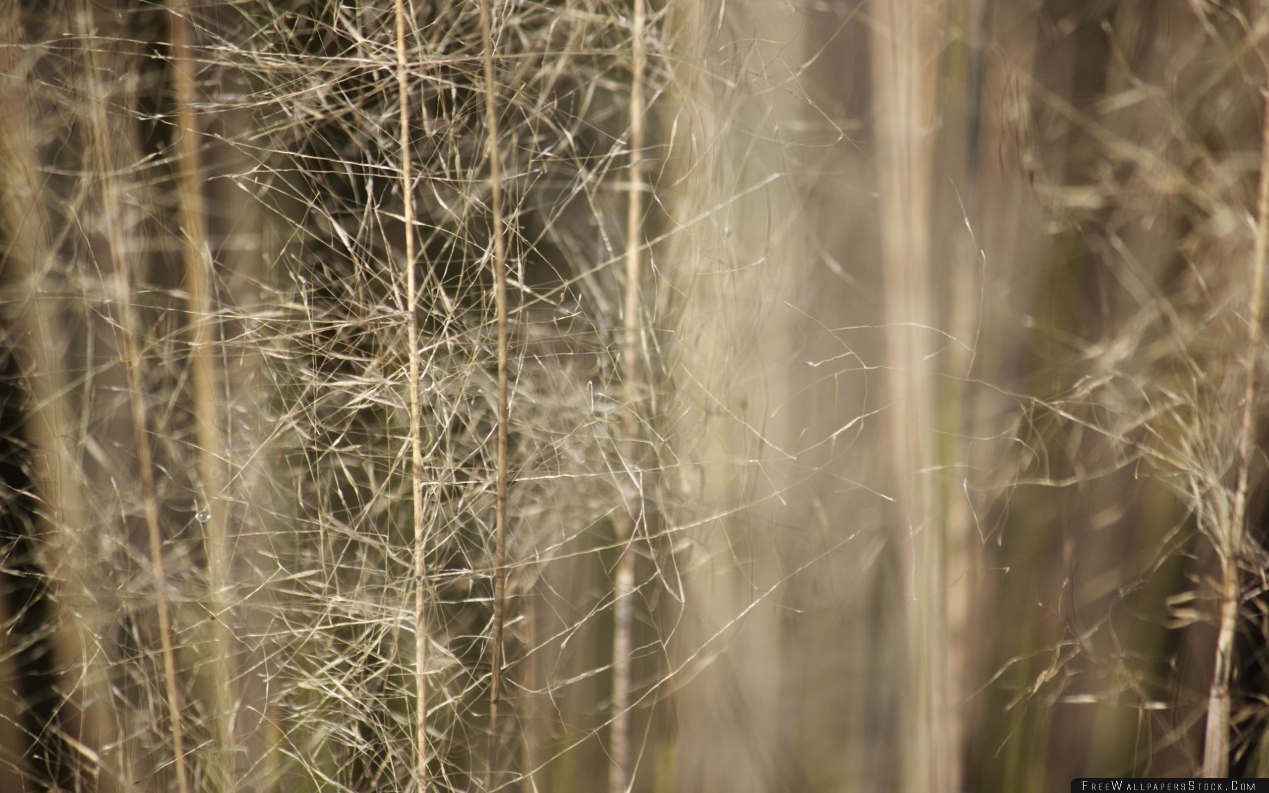Download Free Wallpaper Wispy Grass