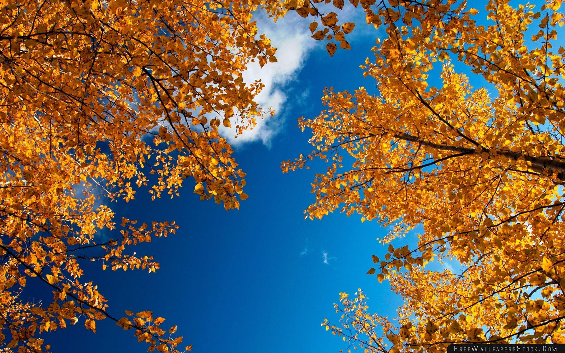 Download Free Wallpaper Yellow Autumn Trees