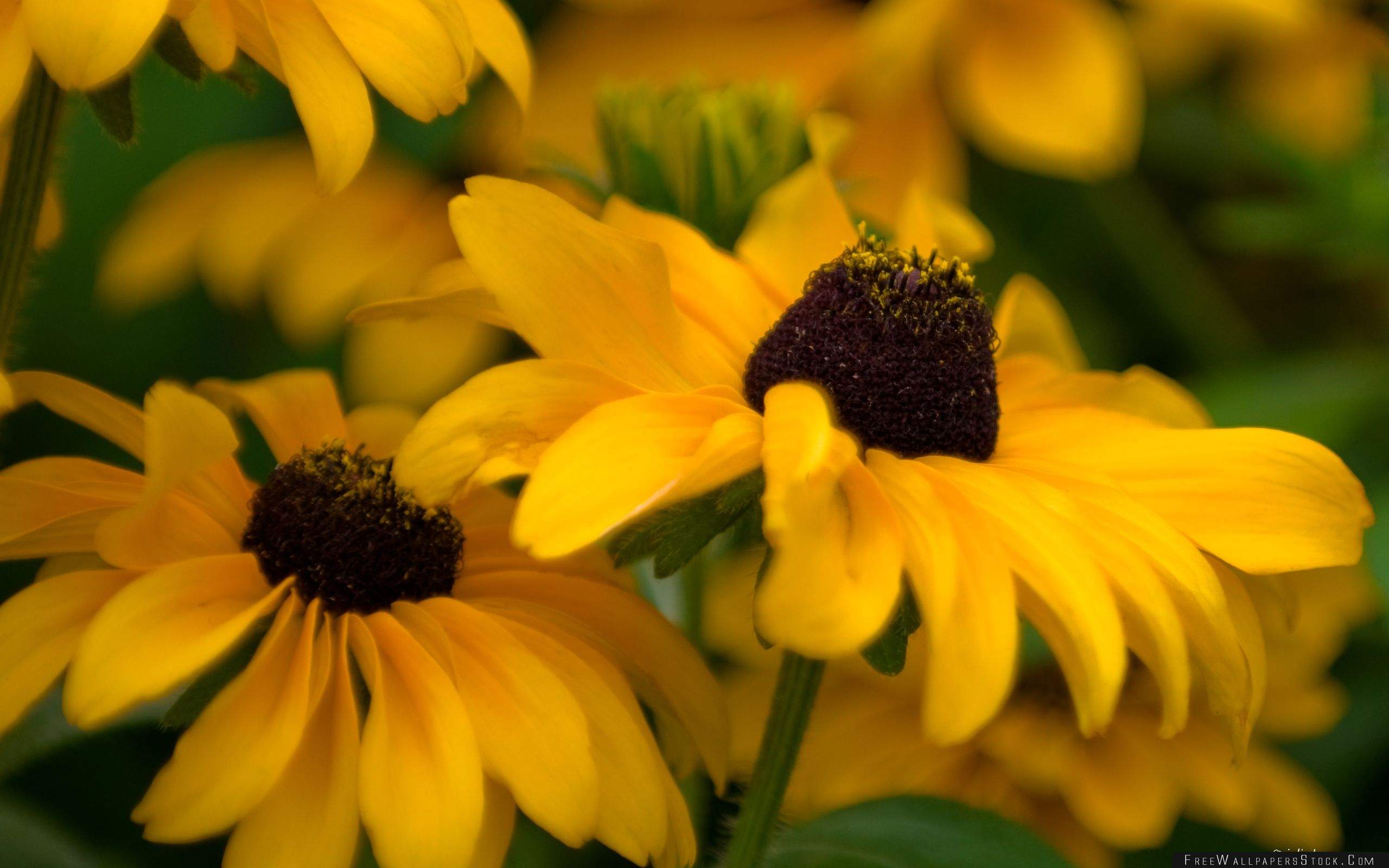Download Free Wallpaper Yellow Beautiful Flowers