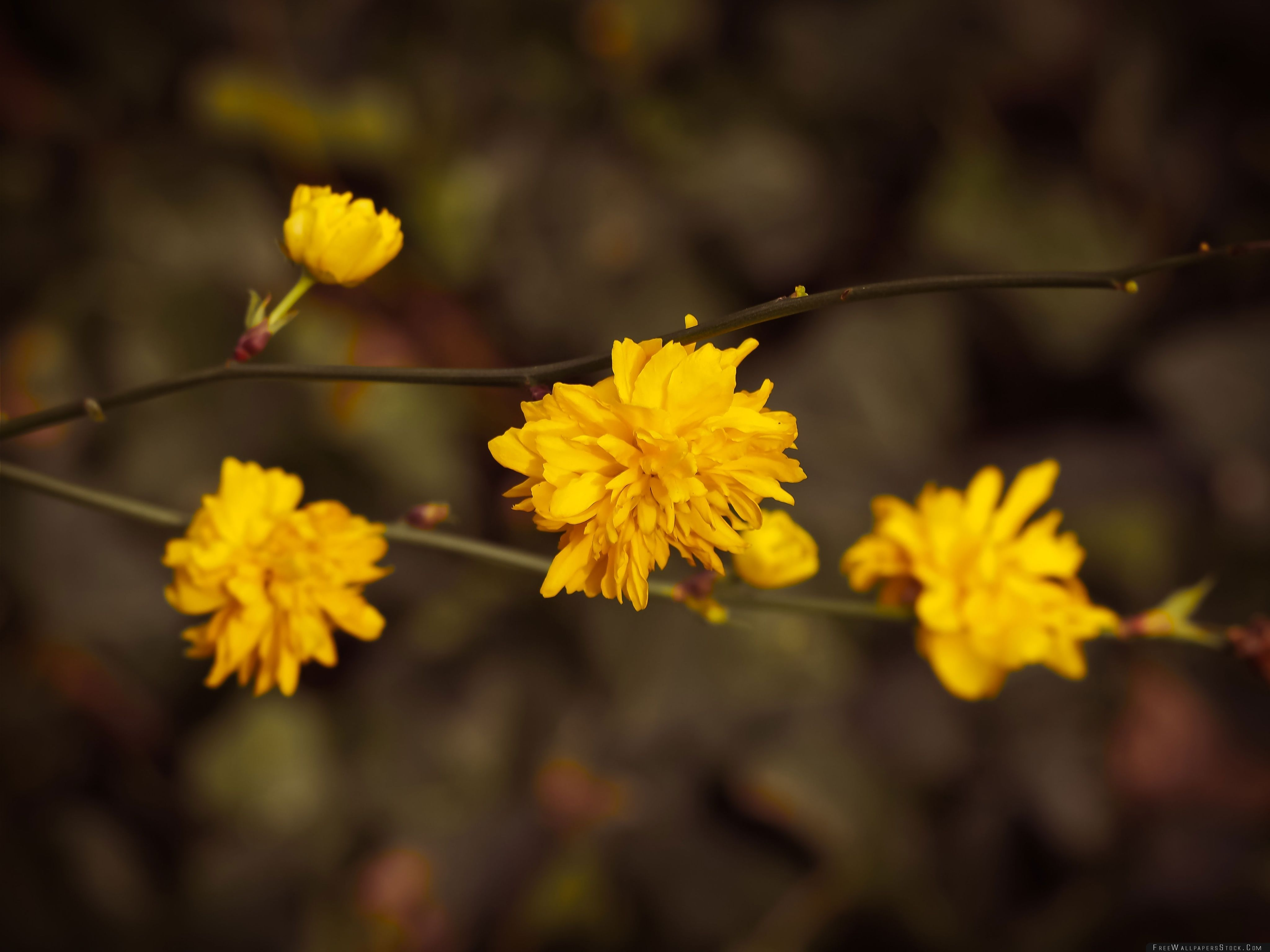 Download Free Wallpaper Yellow Blossoms