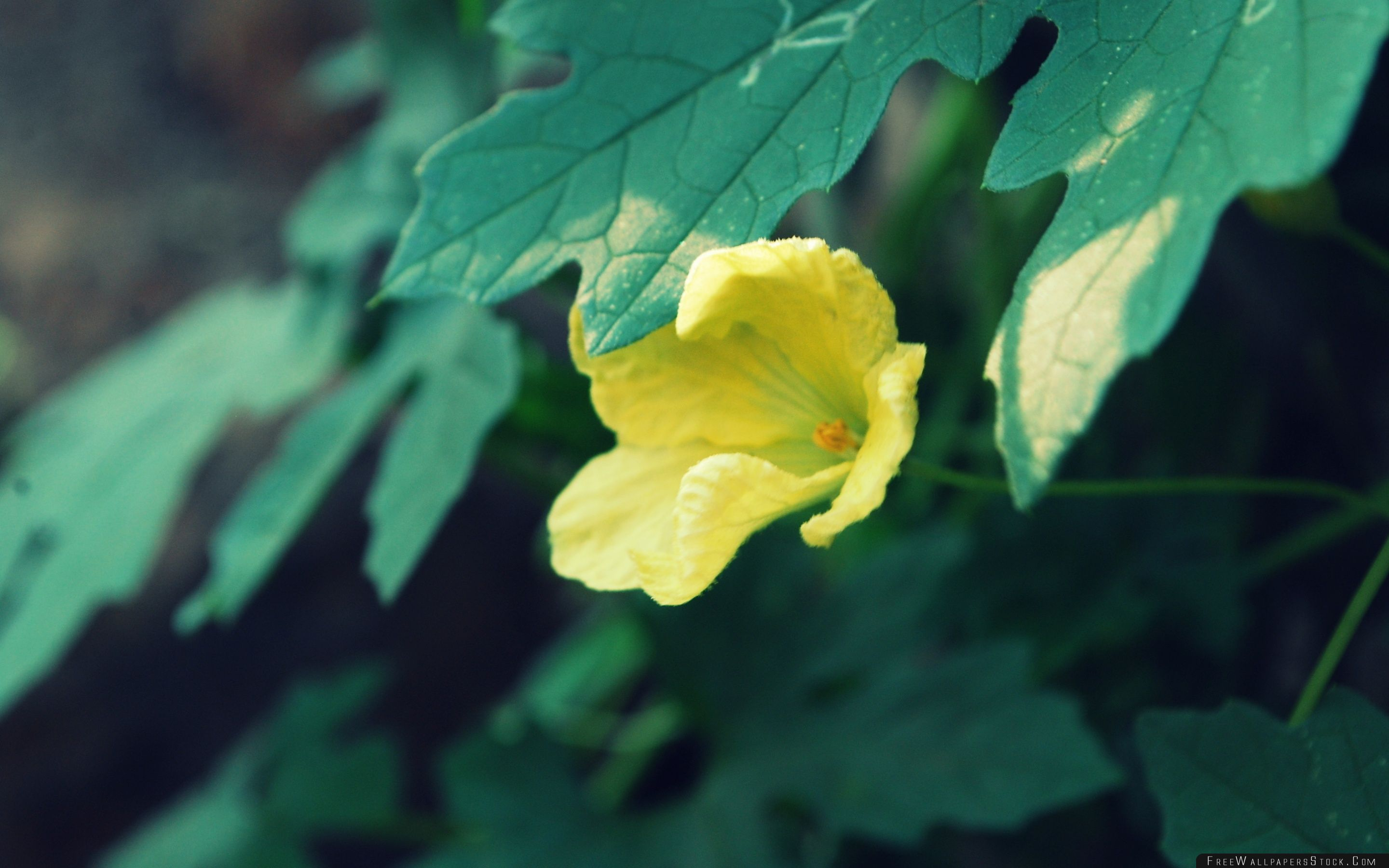 Download Free Wallpaper Yellow Flower Green Leaves