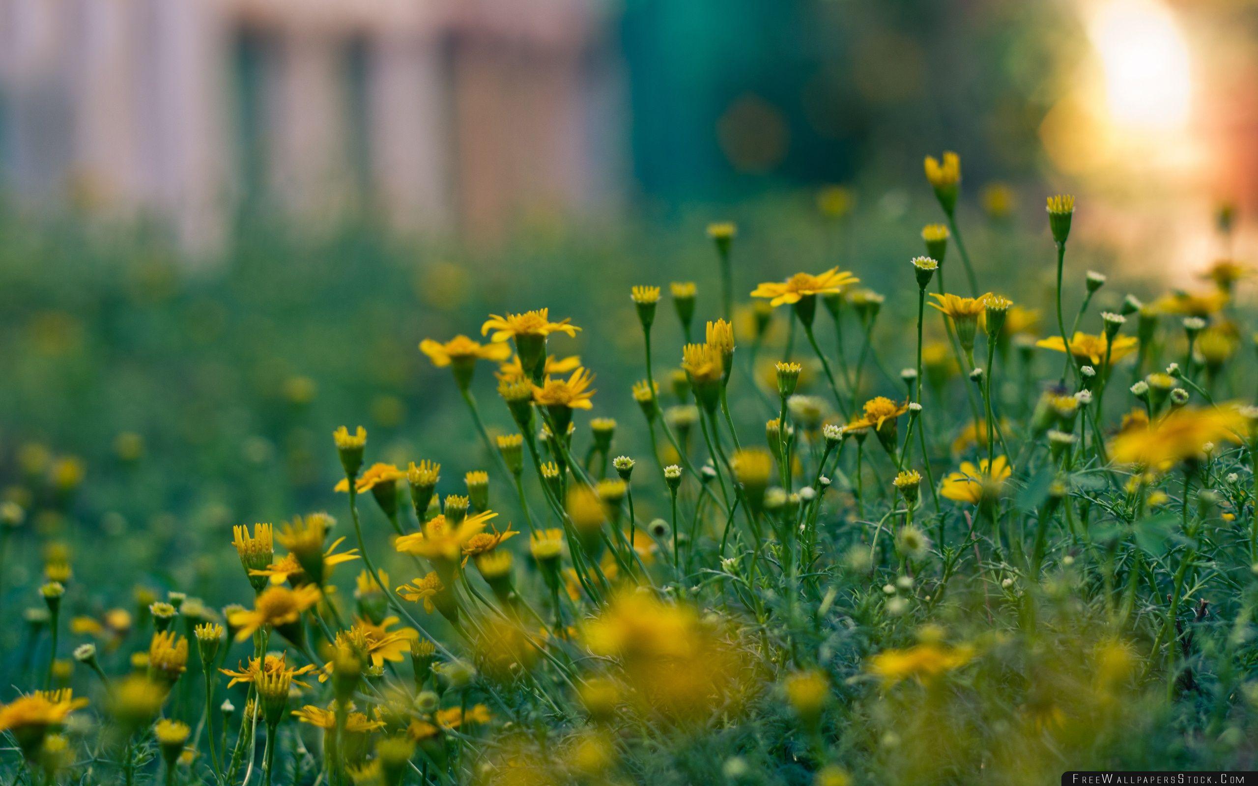 Download Free Wallpaper Yellow Summer Flowers