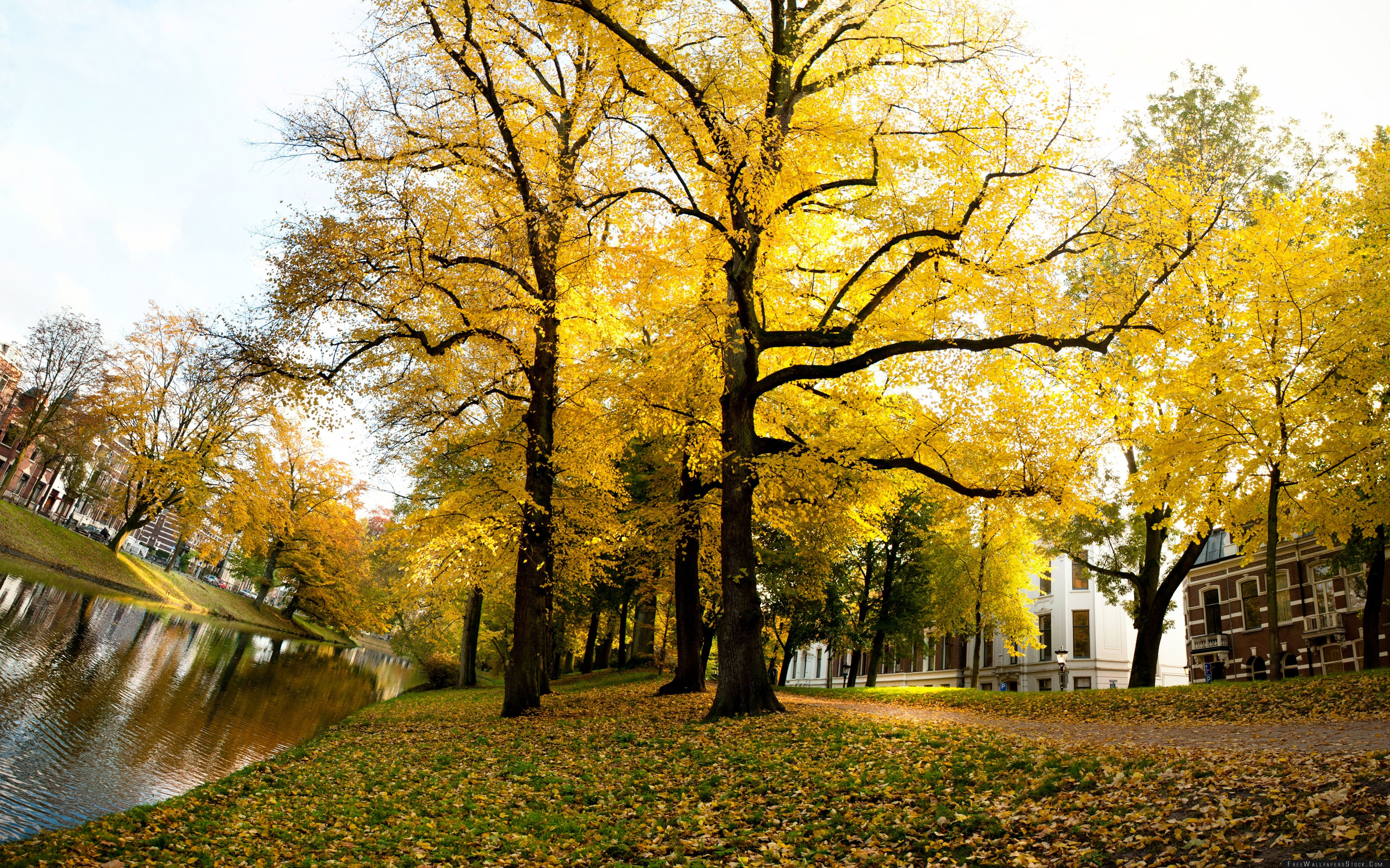 Download Free Wallpaper Yellow Trees Sunny Autumn Afternoon   Utrecht