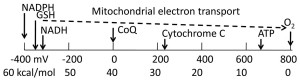 Biological redox energy scale. The highly reduced energy levels of NADPH, GSH and NADH are used to power catabolism with molecular oxygen as the terminal electron acceptor. The step-wise electron transport in mitochondria is used to generate ATP, a lower denomination of energy currency.