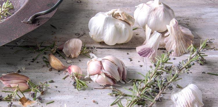 garlic oil as a natural antibiotic