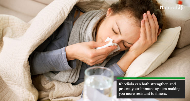 rhodiola rosea found to strengthen the immune system
