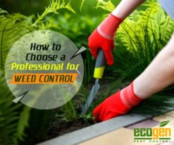 Some Basic Considerations While Choosing A Weed Control Professional