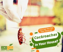 How Can You Tell That There Are Cockroaches In Your House