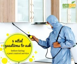 5 vital questions to ask before hiring a pest control service