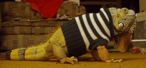 Your REFUGE Weekly 7-21: Reptiles & Raiment