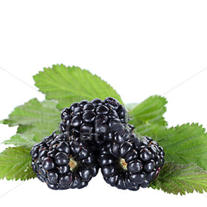 BLACKBERRY e juice flavour