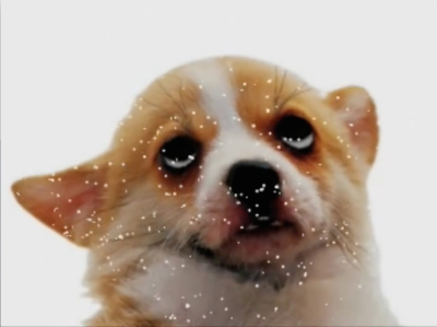 Petra Cortright, Puparazzi, Video animation (still), 2009 / courtesy the artist and Foxy Production, New York