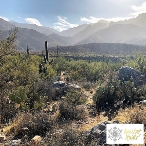 Barefoot Studio Day Retreat at Catalina State Park Event