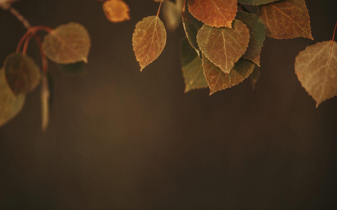 Fall Worship Service Times