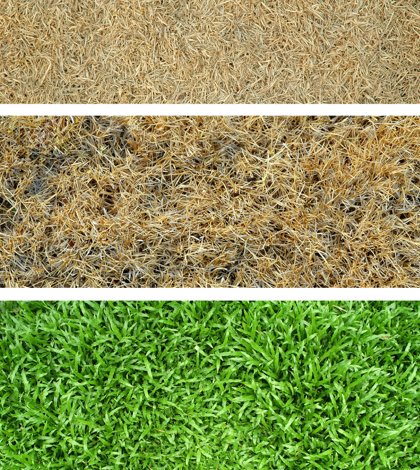 Californian Water Restrictions and Lawn Browning