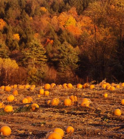 Preparing for Pumpkin Season