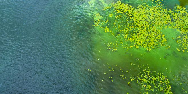Warning issued for toxic algal outbreak at Salton Sea