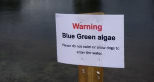 Algae warning at Pyramid Lake