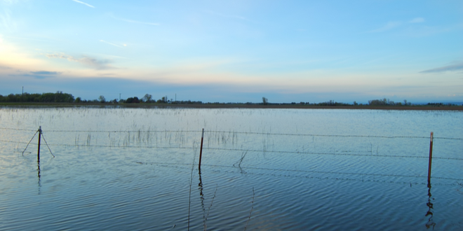 California to pay farmers to flood fields in winter