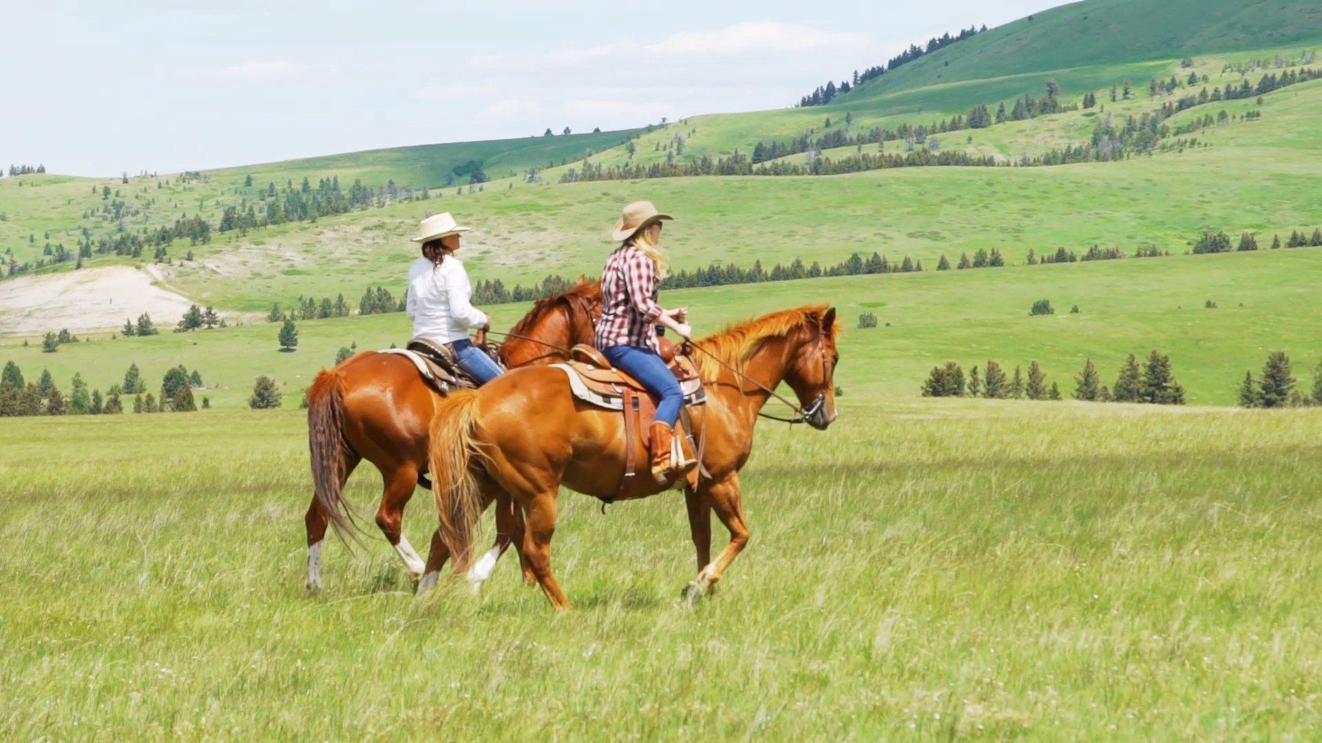 Horseback through meadows