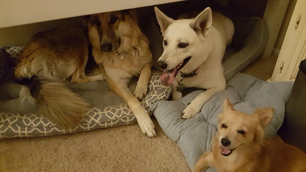 Shana and Tommy's Dogs