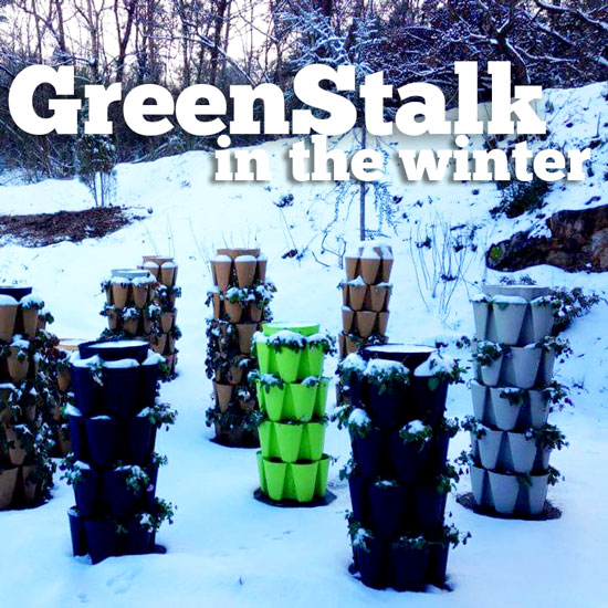 What To Do With Your Vertical Garden In The Winter?