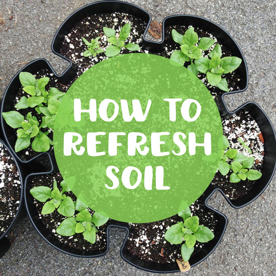 How to Reuse Soil in Container Gardens