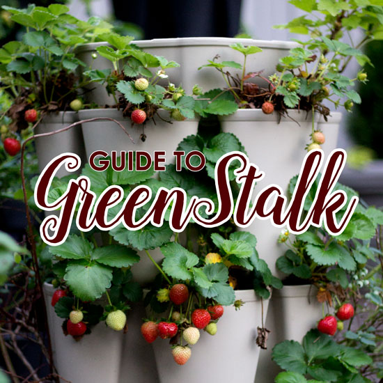 A Detailed How-to Guide to Growing in the GreenStalk Vertical Planter