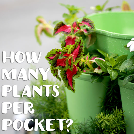 Guide to How Many Plants Per Pocket