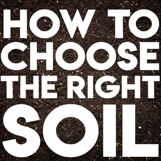 How to Choose the Right Soil for Containers