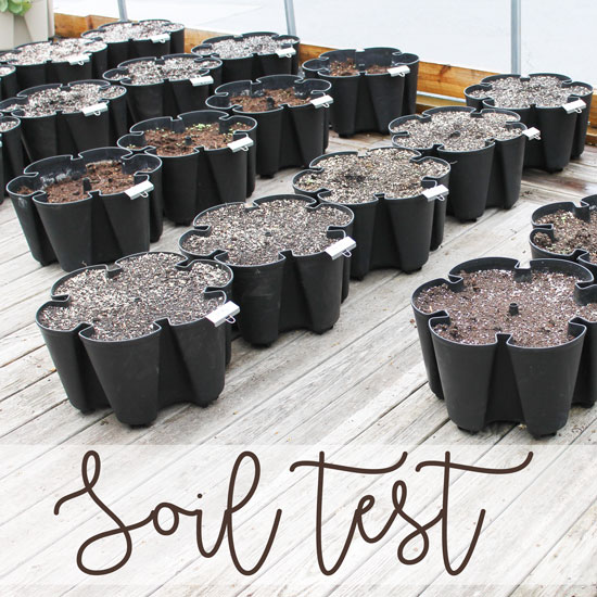 Soil Test – Which Potting Mix is Best?