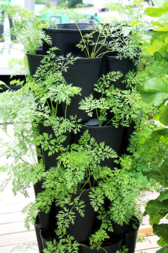 GreenStalk Vertical Garden planted with carrots
