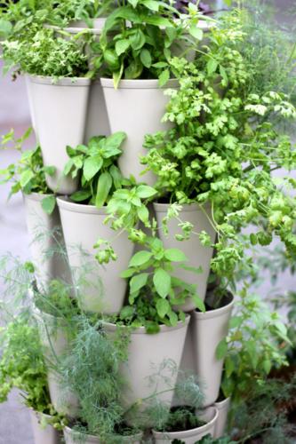 GreenStalk Vertical Garden planted with herbs