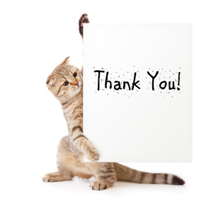 Thank you cat