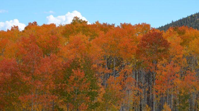 Fall Colors In Breckenridge, Colorado