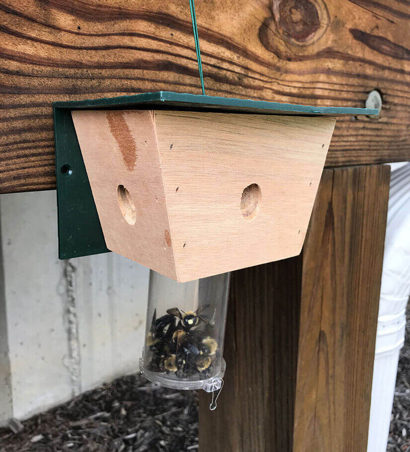 Pest Control Product Example - Carpenter Bee Trap