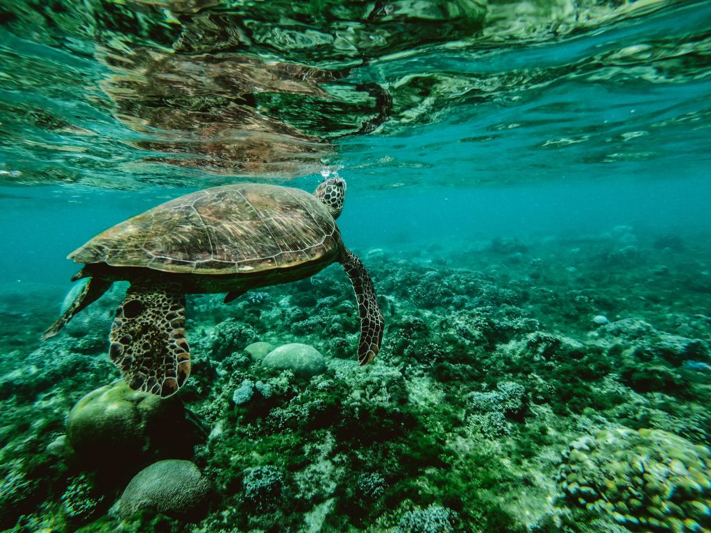 The Great Barrier Reef, Australia one of the best place to visit