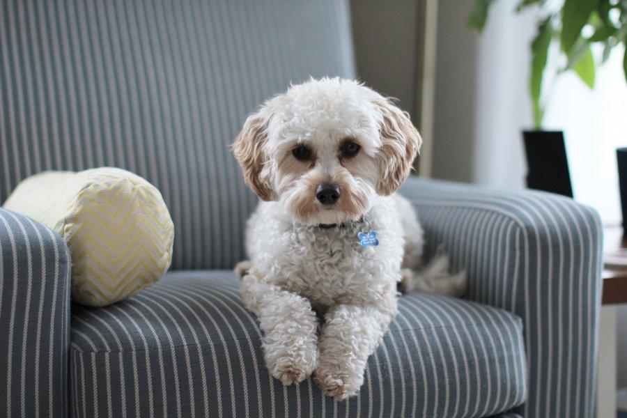Pet in pet friendly Hotels