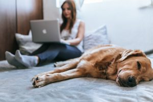 Read more about the article Find Pet-Friendly Hotels In 5 Steps