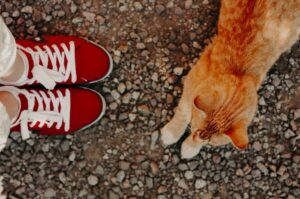 Read more about the article How To Travel With A Cat?
