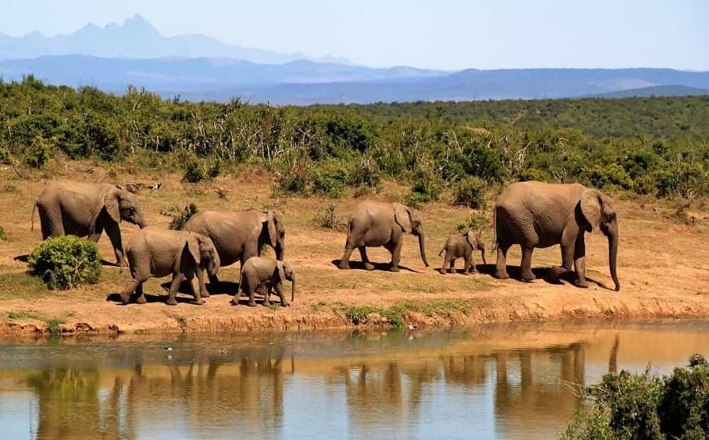 elephants 279505 1920 min Best Tour Place
