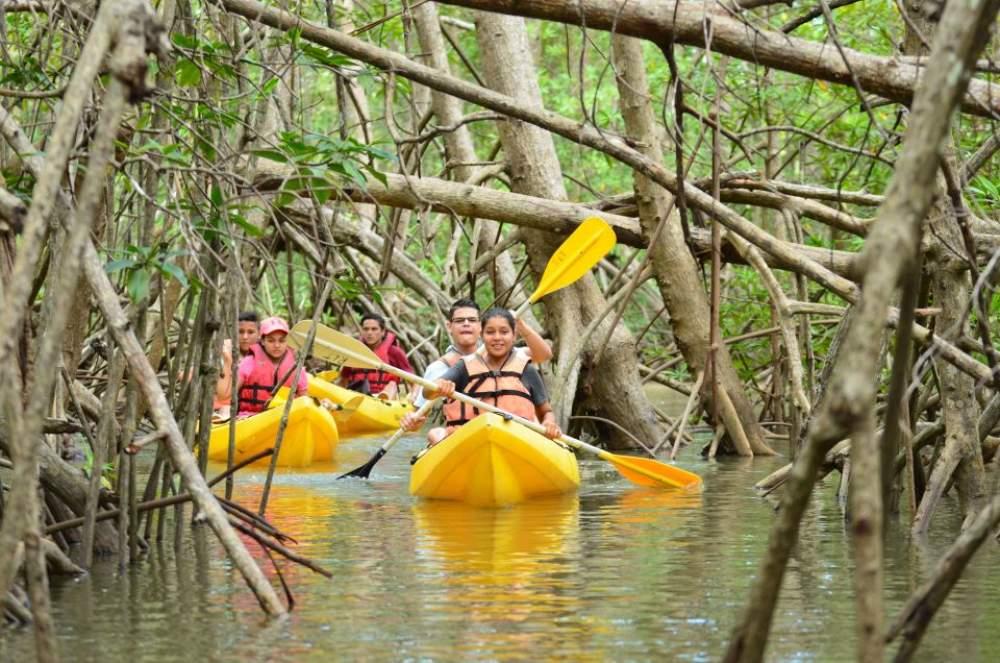 Mangrove Kayaking At Mayabunder Best Tour Place