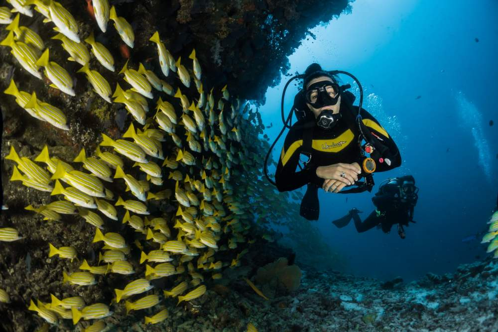 things to do in Andaman Scuba Diving