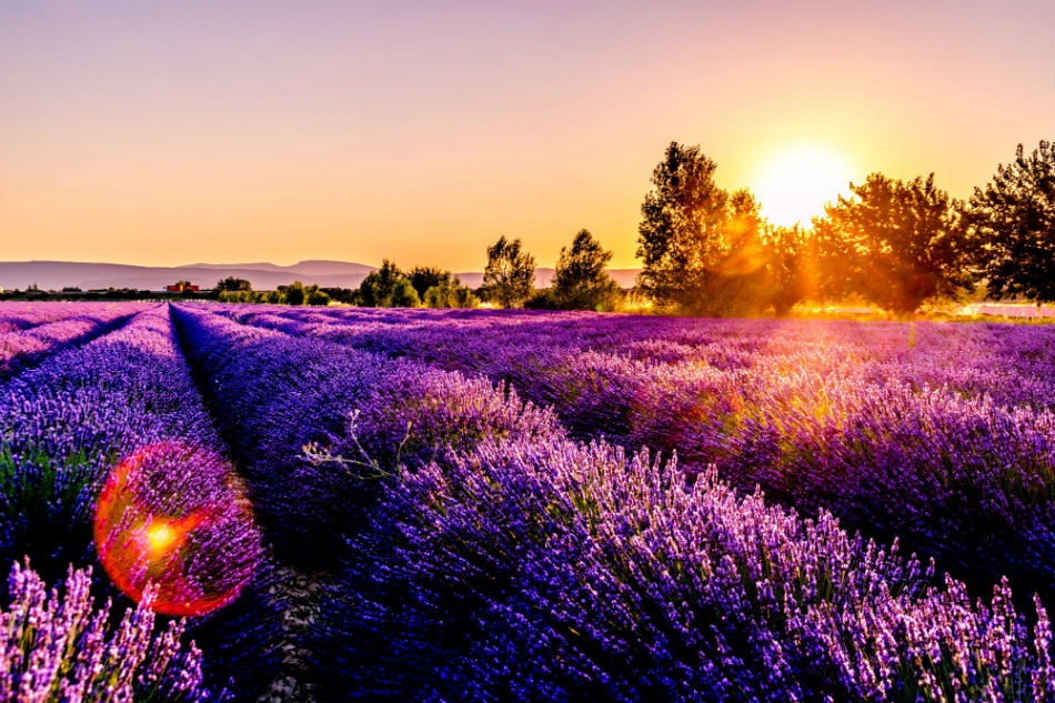 Alii Kula Lavender Best Tour Place