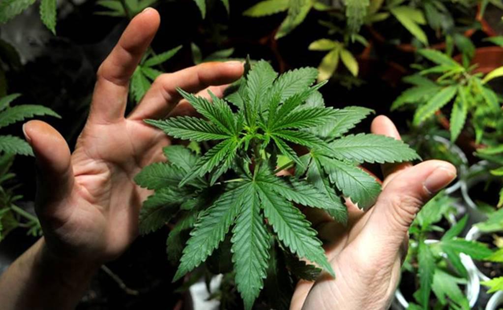 Reglamento de la marihuana