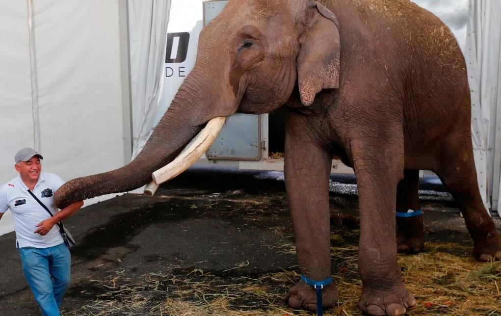 Elefante liberado