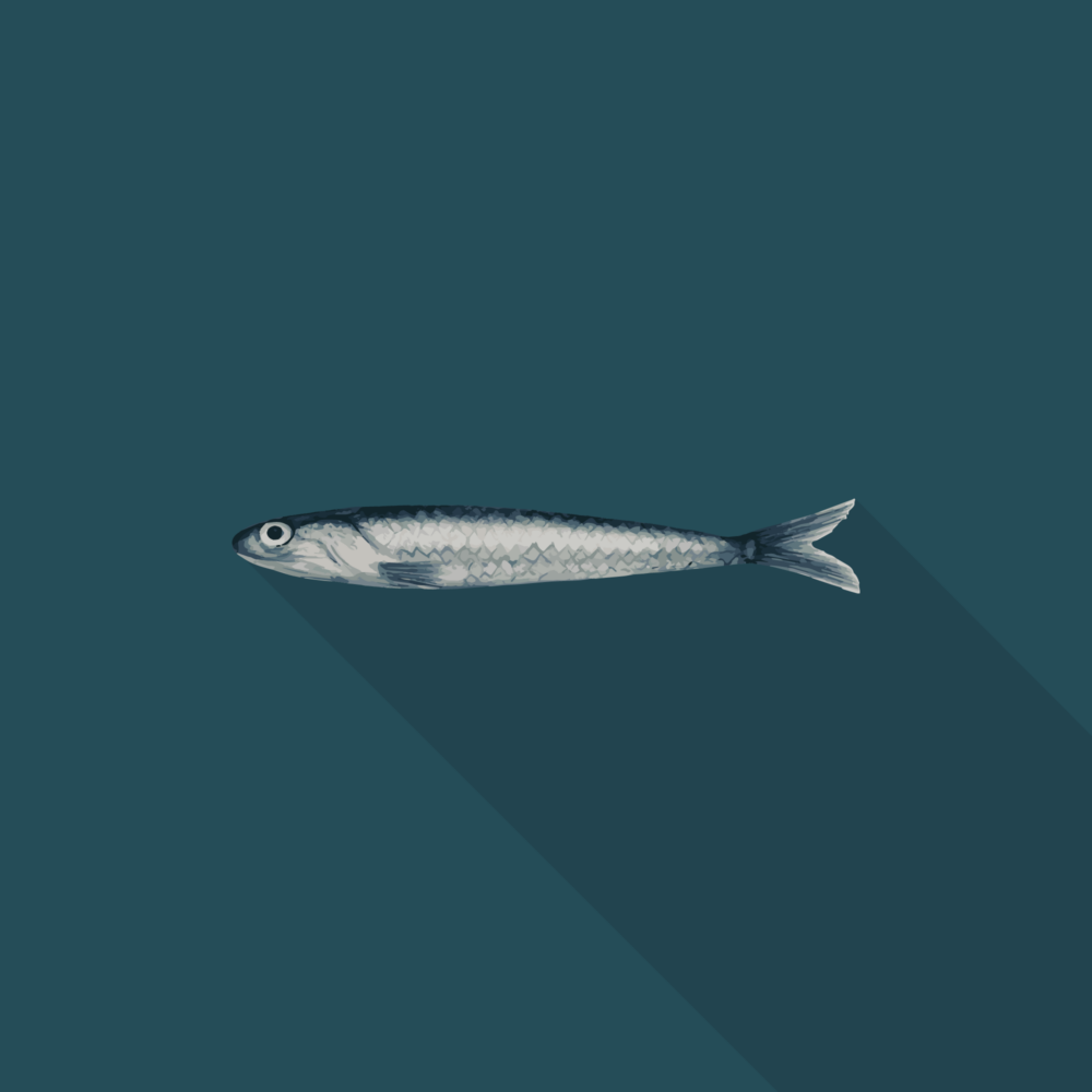 jason-b-graham-anchovy-icon-featured-image