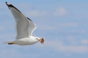 Seagull Steals Man's Wallet